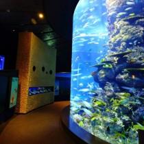 シンガポール観光!1日使ってアクアリウム、動物園、ナイトサファリのツアーがおすすめ