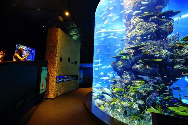 シンガポール・セントーサ島のシーアクアリウムの筒型水槽