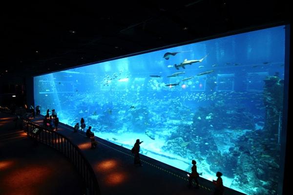 シンガポール・セントーサ島のシーアクアリウムの38mの水槽