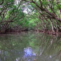 奄美大島の観光スポット。ビーチやマングローブ原生林!