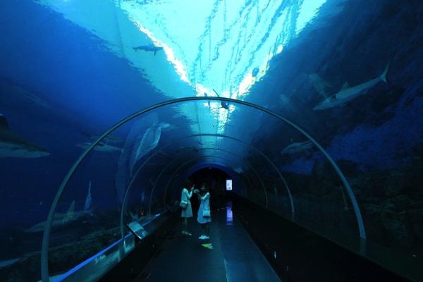 シンガポール・セントーサ島のシーアクアリウムのトンネル