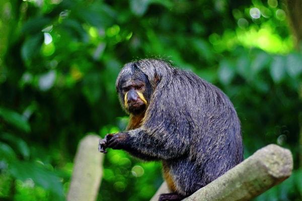 シンガポール動物園の動物