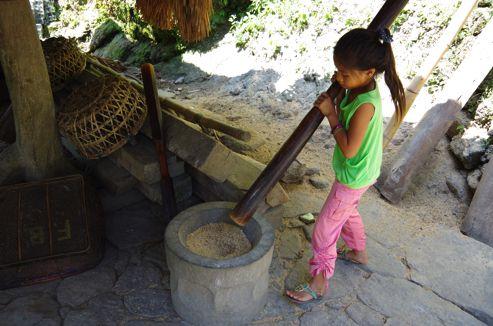収穫されたお米を脱穀中