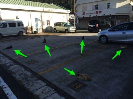 スヌーピー近くの駐車場はネコ祭